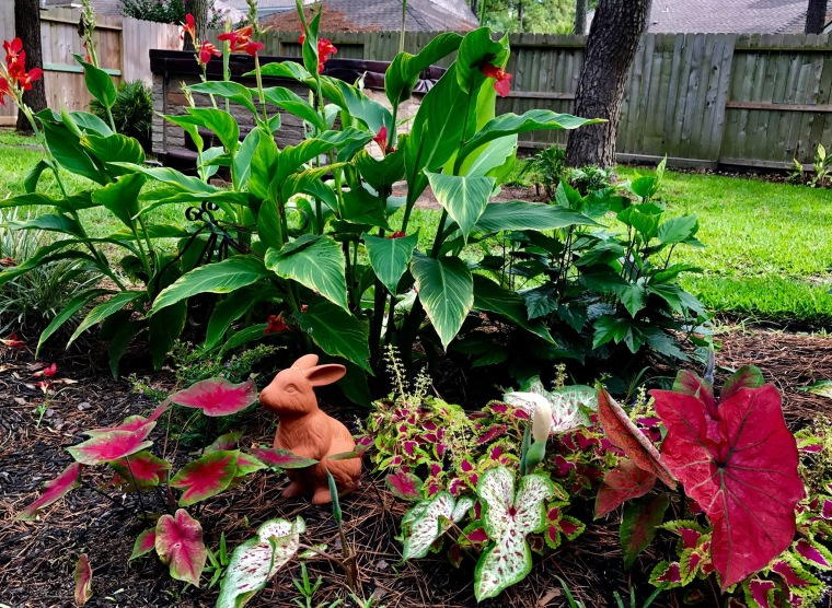 To Create Sunshine backyard garden